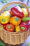 Basket with fresh colorful peppers Stock Photos