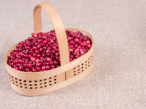 Basket with fresh cranberries close-up. Autumn berries. Royalty Free Stock Image