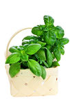 Basket of Fresh Cut Basil Royalty Free Stock Image