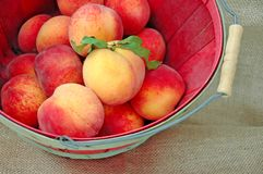 A Basket of Fresh Deliciious Peaches Royalty Free Stock Photography