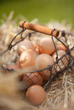 Basket of fresh eggs on the farm Royalty Free Stock Images