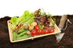 Basket of fresh garden produce Stock Photography
