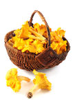 Basket with fresh golden chanterelles on white isolated backgrou. Nd Royalty Free Stock Photography