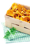 Basket with fresh golden chanterelles on white isolated backgrou. Nd. twig of parsley Stock Photo