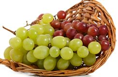Basket of fresh grape. Fresh green and red grape in a wicker basket, isolated on white royalty free stock images