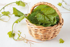 Basket with fresh grape leaves Stock Photos