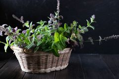 Basket with fresh green mint Stock Photography