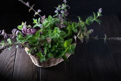 Basket with fresh green mint Stock Photos
