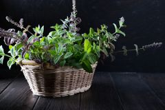 Basket with fresh green mint Royalty Free Stock Photography