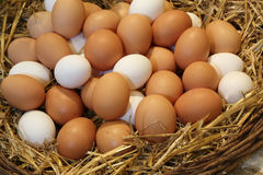 Basket with fresh hen eggs in the farm of organic produce. Basket with lots of fresh hen eggs in the farm of organic produce Stock Images