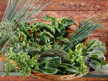 Basket of fresh herbs Stock Image