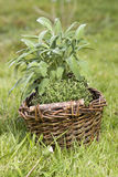 Basket with fresh herbs Royalty Free Stock Images