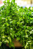 A basket of fresh italian parsley Royalty Free Stock Images