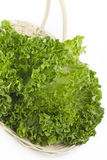 Basket of Fresh Leaf Lettuce Stock Image