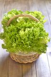 Basket with fresh lettuce Stock Photos