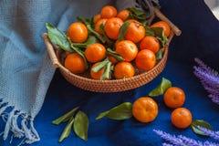 Basket of fresh mandarin oranges Tangerins with green leaves. royalty free stock photos