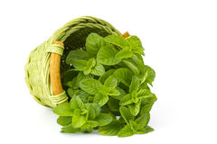 Basket with fresh mint Royalty Free Stock Images