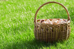 Basket of fresh mushrooms Stock Images