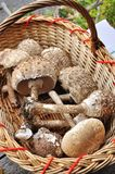 Basket with fresh mushrooms Royalty Free Stock Image