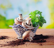 Basket of fresh mushrooms and herbs Royalty Free Stock Photography