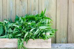 A basket of fresh nettles in a wooden box. Nettle leaf with copy space. Horizontal royalty free stock photos