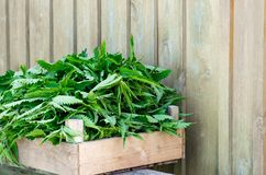 A basket of fresh nettles in a wooden box. Nettle leaf with copy space. Horizontal royalty free stock photo