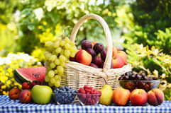 Basket with fresh organic fruits Stock Images