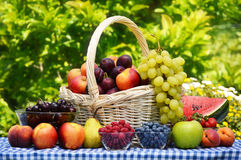 Basket of fresh organic fruits in the garden Royalty Free Stock Images