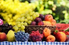 Basket of fresh organic fruits in the garden Stock Photos