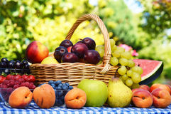Basket of fresh organic fruits in the garden Royalty Free Stock Photography