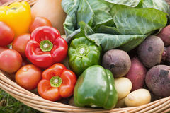Basket of fresh organic veg Stock Photography