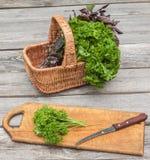 Basket with fresh parsley and basil Stock Image