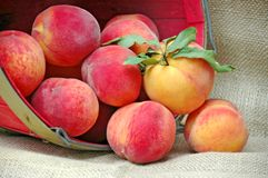 A Basket of Fresh Peaches Stock Images