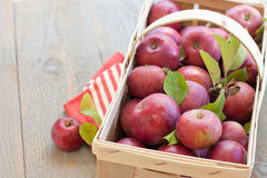 Basket of fresh picked apples. An orchard basket full of fresh picked apples rests on a gray farmhouse table with a red striped napkin Stock Image