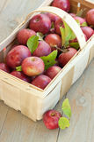 Basket of fresh picked apples. An orchard basket full of fresh picked apples rests on a gray farmhouse table Stock Image