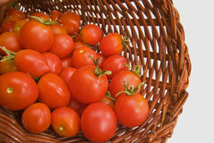 Basket Of Fresh Picked Cherry Tomatoes Royalty Free Stock Image
