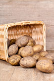 Basket with fresh potatoes Royalty Free Stock Photos