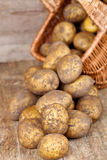 Basket with fresh potatoes Royalty Free Stock Images