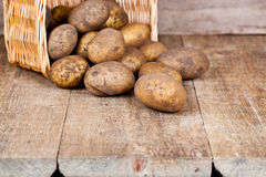 Basket with fresh potatoes Stock Image