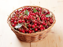 Basket of fresh red cherries royalty free stock images