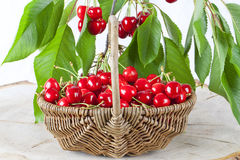Basket of fresh red cherries Stock Photos