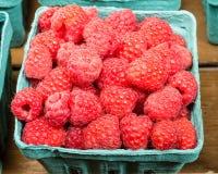 Basket of fresh Red Raspberries Royalty Free Stock Images