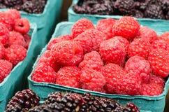 Basket of fresh Red Raspberries. A basket of fresh red raspberries on display at the market Stock Photos