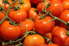 Basket of fresh red vegan vegetable tomatoes. Basket of fresh red vegan vegetable tomatoe Stock Image