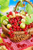 Basket of fresh red,white currant and gooseberry Stock Photo
