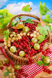 Basket of fresh red,white currant and gooseberry Royalty Free Stock Image