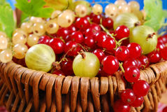 Basket of fresh red,white currant and gooseberry Royalty Free Stock Images