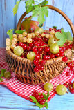 Basket of fresh red,white currant and gooseberry Royalty Free Stock Photography