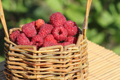 Basket with fresh ripe raspberries standing on a table. In a garden Stock Photo