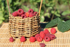 Basket with fresh ripe raspberries standing on a table Stock Image